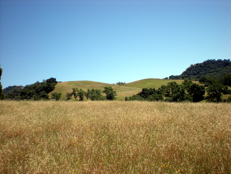 Sunol Wilderness Review